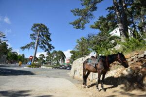 Planinski predeo, Kipar - priroda i konji